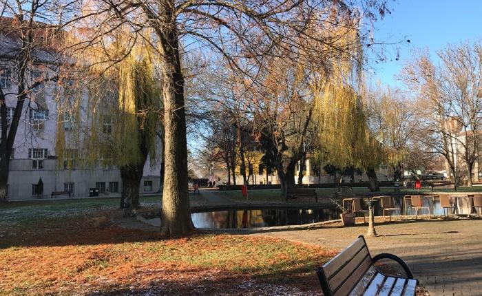 The University of Oradea: APreview